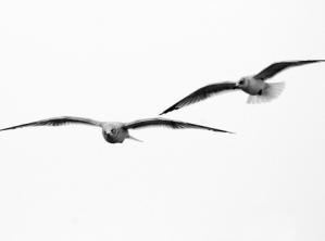 birdsmomdad